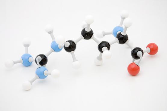 arginin-aminokislota