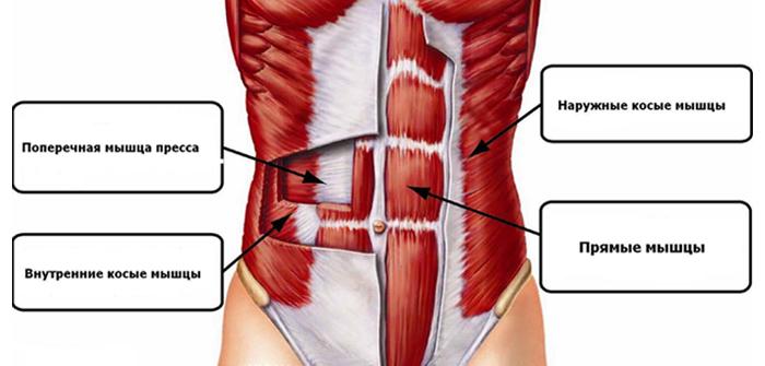 Упражнения для боковых мышц живота
