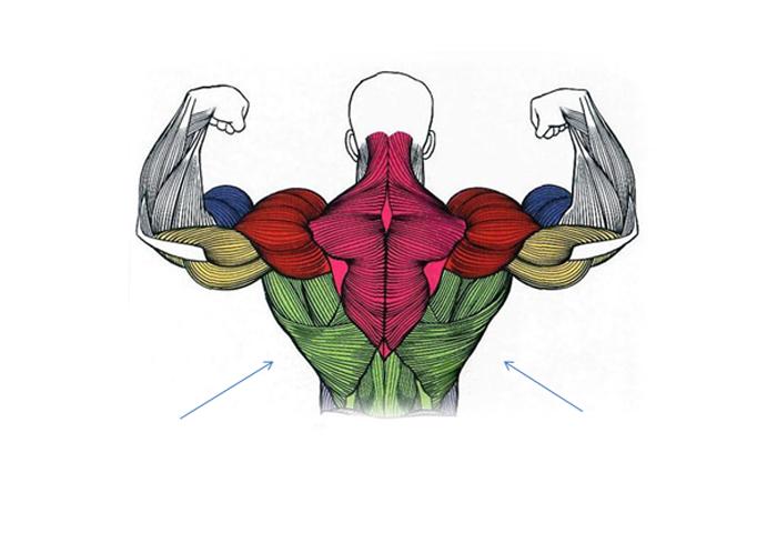 Упражнения на крылья для спины с гантелями